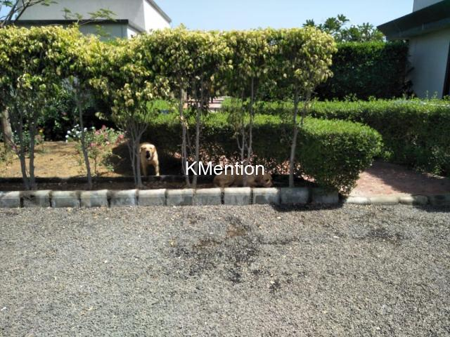 S.K. Farmhouse on rent one day Virpore - 25km from Sarthana, Surat - 6/10