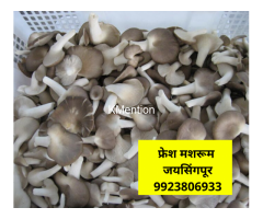 Mushroom Cultivation Training in Kolhapur, Maharashtra, india