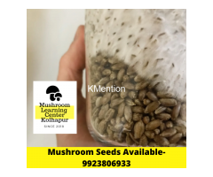 Mushroom seeds spawn lab in kolhapur