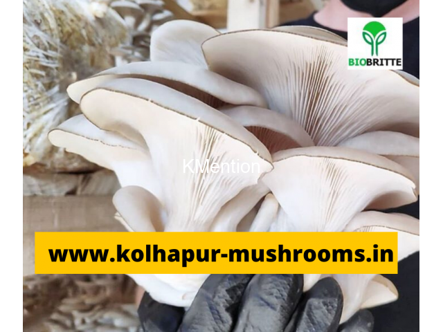 Mushroom spwn supplier in maharashtra india - 1/3