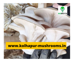 Mushroom spwn supplier in maharashtra india