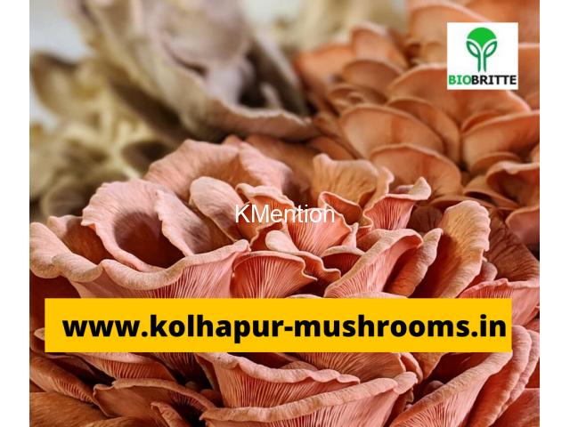 Mushroom spwn supplier in maharashtra india - 2/3