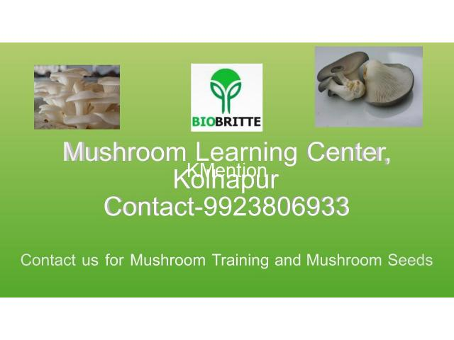 Mushroom spwn supplier in maharashtra india - 3/3