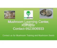 Mushroom spwn supplier in maharashtra india - Image 3/3